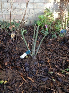 Planted. Cross (green) fingers...